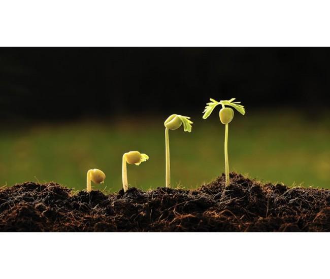 propagaci n de plantas en vivero