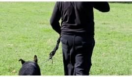 Adiestramiento de Base y Educación Canina