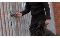 Técnicas de Adiestramiento de Base Aplicadas a Perros